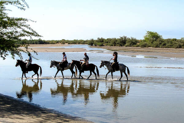 Horses in Senegal in the Delta of Sine Saloum