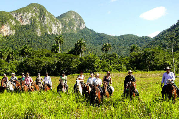 Horses in the Cuban landscape
