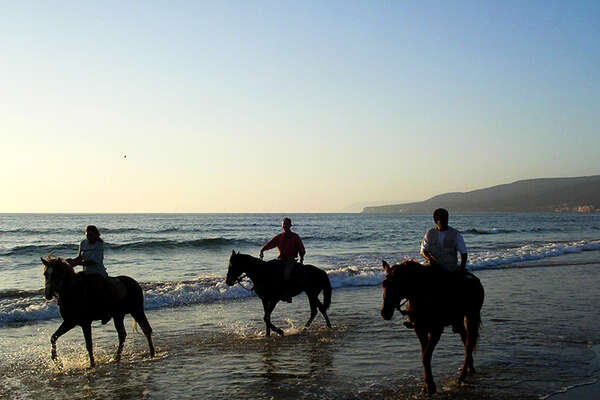 Horses on the beach in Morocco