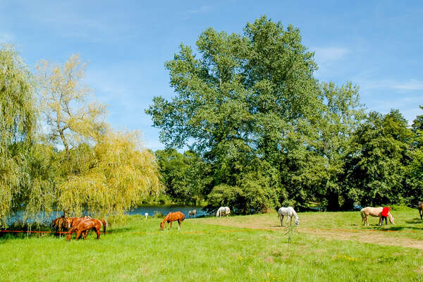 Horses paddocked in the countryside near Mimizan, France
