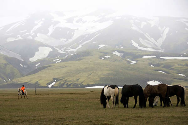 Icelandic horses and rider in Iceland