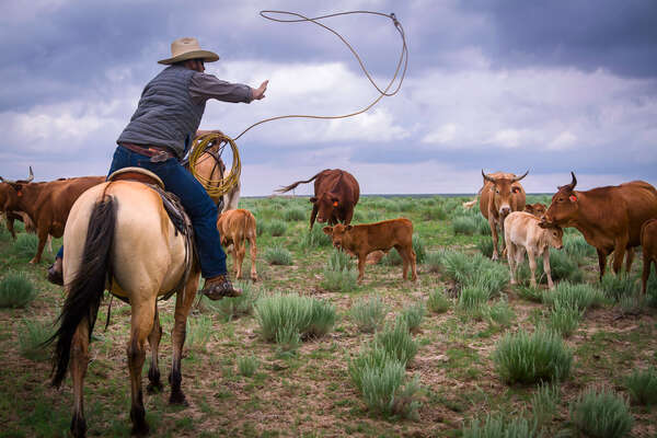 Kate Matheson working cattle at Chico Basin ranch in Colorado