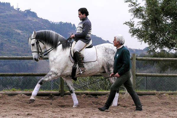 Lusitano horses and dressage in Portugal