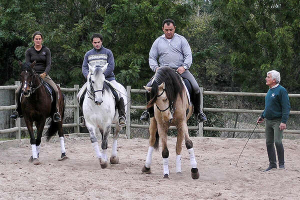 Lusitano horses and dressage lessons