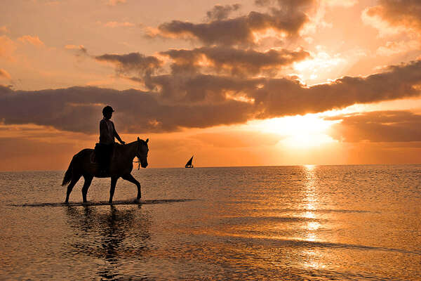 Mozambique and horse in sunset