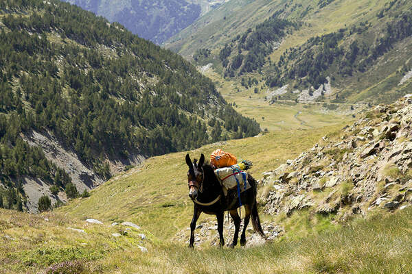 Mule on an expedition by horse in the Pyrenees