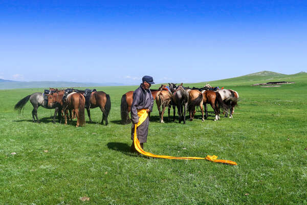 Nomad and his herd of Mongol horses in Mongolia