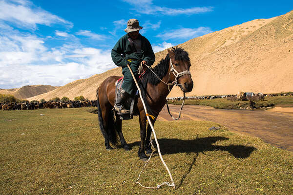 Nomad and horses in Mongolia