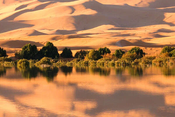 Oasis and dunes in Sahara, Morocco