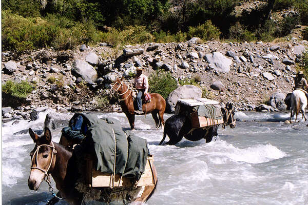 Pack animals crossing a stream in Argentina