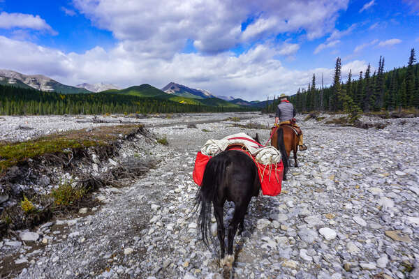 Pack horse being led on a pack trip adventure in Alberta, Canada