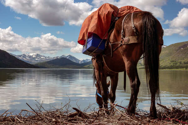 Pack horse by a lake in Canada