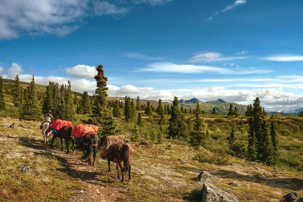 Pack horses on a Wild Yukon Expedition
