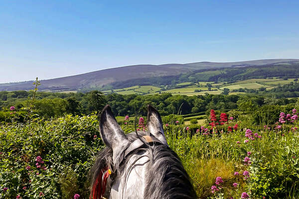 Porlock and Exmoor hills seen between the ears of a horse on a trail ride