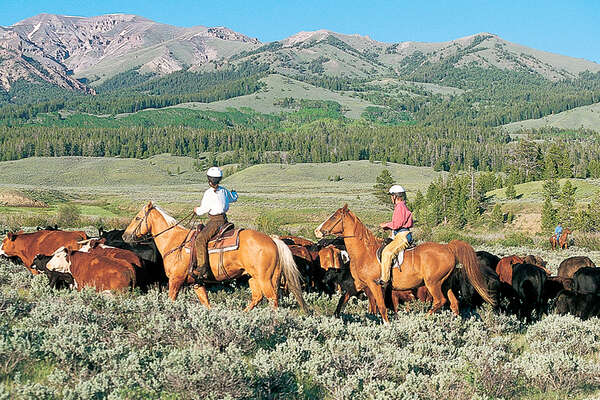 Ranch experience and cattle drive in Wyoming