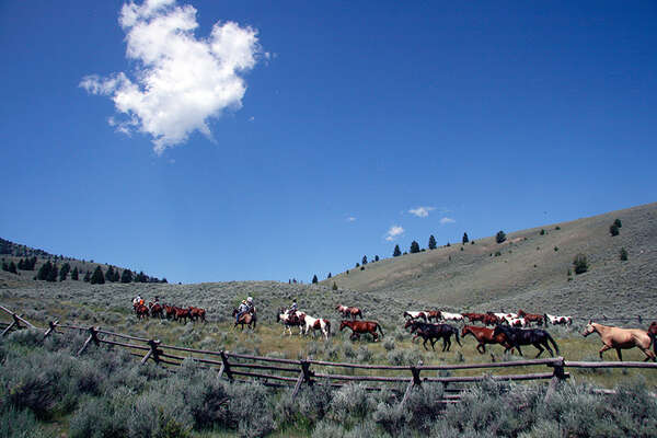 Ranch stay with horse drive in Idaho USA