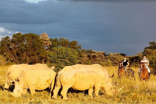 Rhinos and horses in South Africa