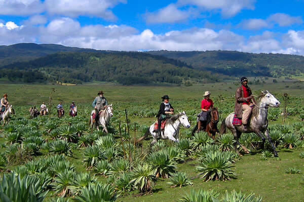 Ride Ethiopian horses in the Bale Mountains National Park