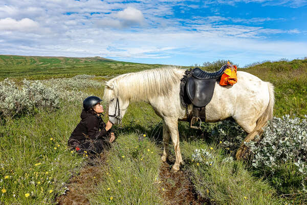 Rider and Icelandic horse enjoying a break during a trail riding holiday