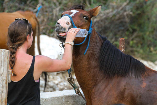 Rider giving water to her horse during a trail riding holiday