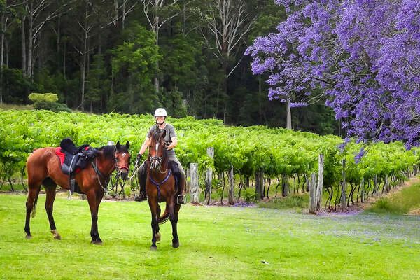 Rider in NSW in Australia in front of a jacaranda tree in bloom