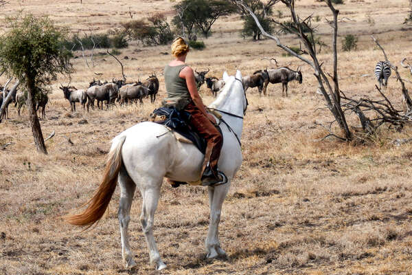 Rider watching a herd of wildebeest from horseback