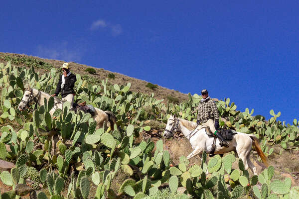 Riders and cactii in Morocco