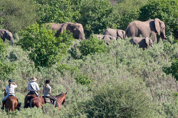 Riders and elephants in Botswana