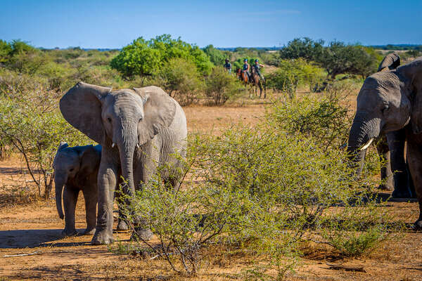 Riders and elephants in Mashatu Game Reserve