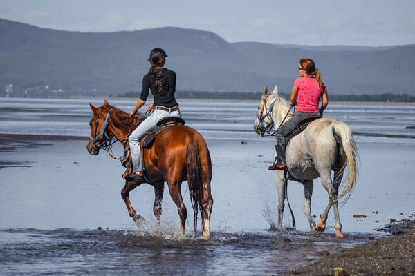 Riders and horses on the beach in Canada