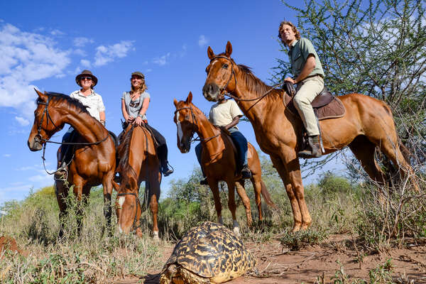 Riders and horses posing with a tortoise