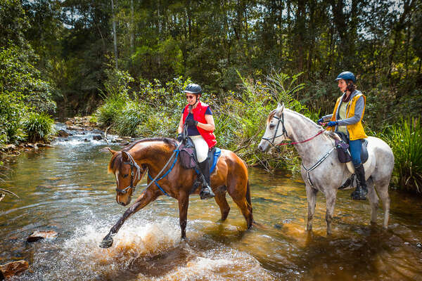 Riders and horses splashing in a creek during a riding holiday in Australia