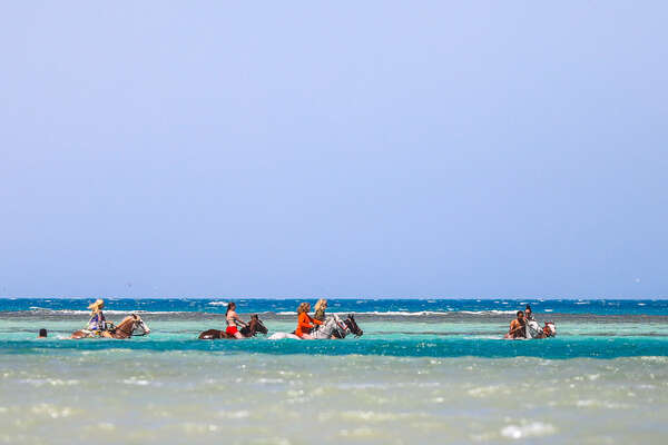 Riders and horses swimming in Egypt