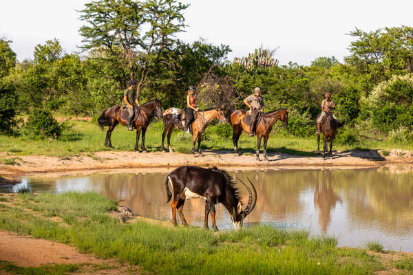 Riders at Ant's Lodges watching sable antelope in the saddle