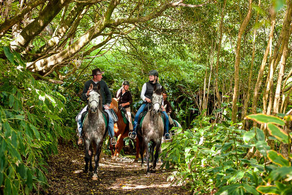 Riders enjoying a trail ride in the Azores