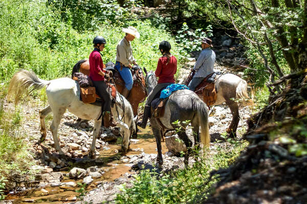 Riders letting their horses drink from a stream on a trail riding vacation in Croatia