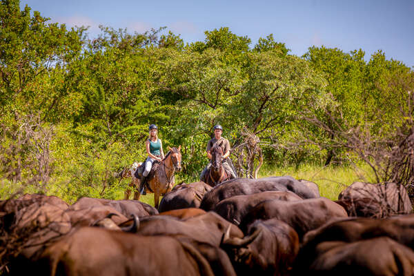 Riders on a horse safari in South Africa at Ant's collection