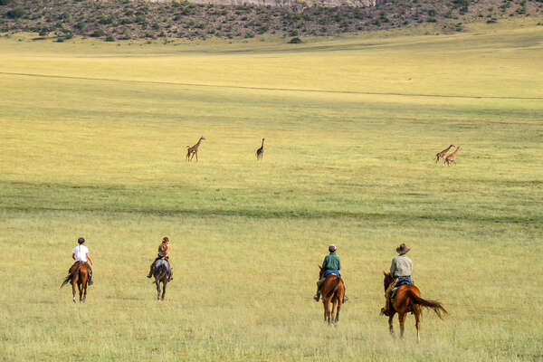 Riders riding towards giraffe in Tanzania