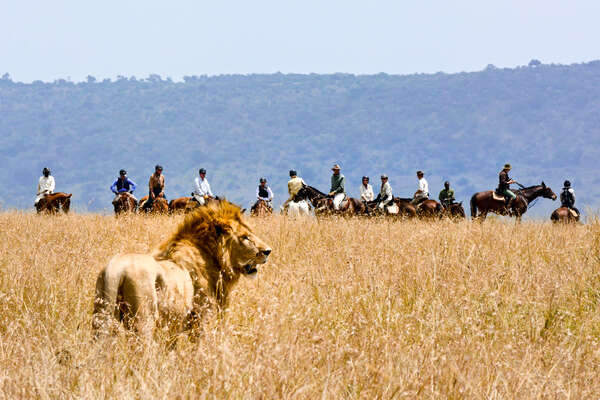 Riders watching a lion on a riding safari in the plains of the Mara in Kenya