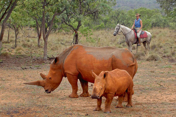 Riders watching rhino on a riding safari at Ant's lodges
