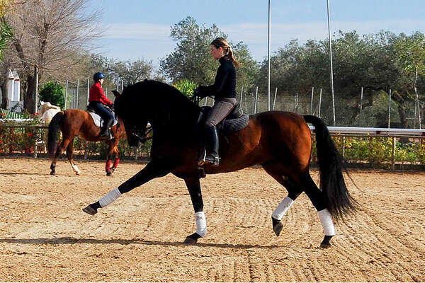 Riding holiday dressage in Spain