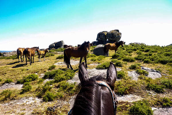 Riding holidays and trail riding in Portugal