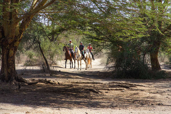 Riding in Tanzania and spotting wildlife