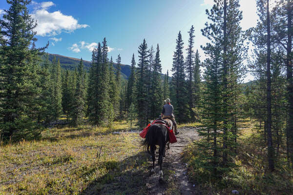 Riding through the pine forests of western Canada, near Calgary