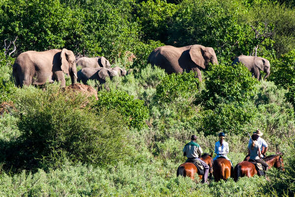Riding with elephant in Botswana, African Explorer