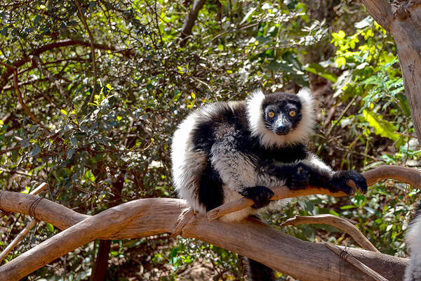 Riding with lemur and Madagascar