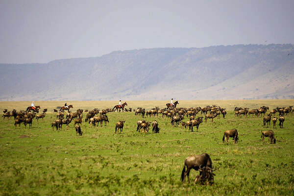 Riding with wildebeest in Kenya