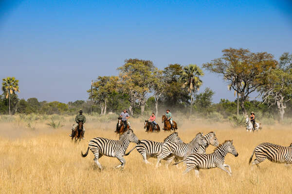 Riding with wildlife in the Okavango Delta