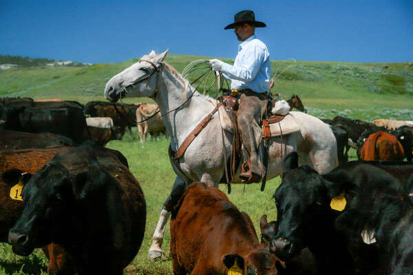 Roping cattle on a working ranch vacation