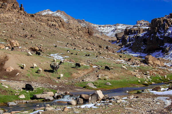 Scenery of the Atlas mountains and cattle grazing